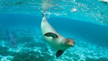 evolucion-de-los-mamiferos-marinos-para-adaptarse-al-agua|evolucion-de-los-mamiferos-marinos-para-respirar-bajo-el-agua