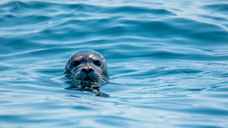 Cuidados específicos de las focas criadas en cautividad 1