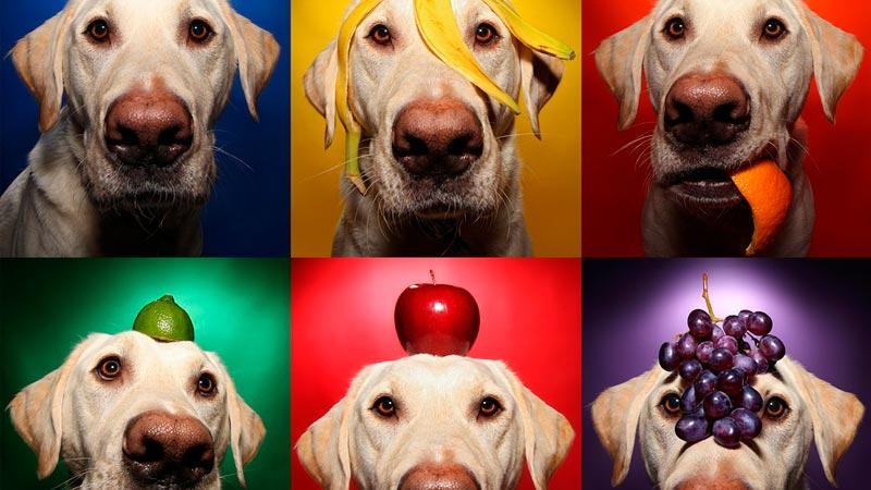 frutas-para-perros|perro-manzana.CIMFormacion