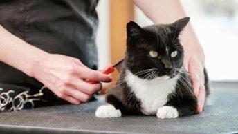 gato-en-peluqueria