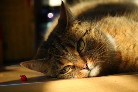 gato-relajado