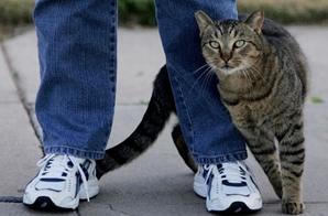 gato restregandose en la pierna