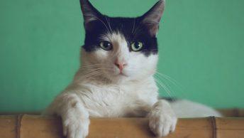 Gato apoyado sobre una superficie