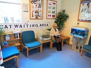 Hay clínicas que disponen de sala de espera especial para gatos.