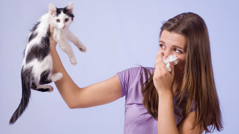 gato tiene mal aliento|limpieza dental profesional en el gato
