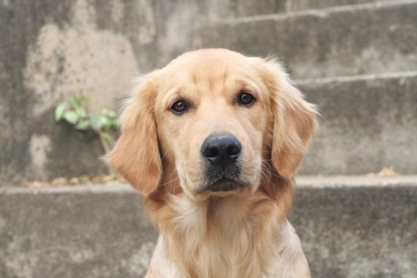 Diez razas de perros para niños 3