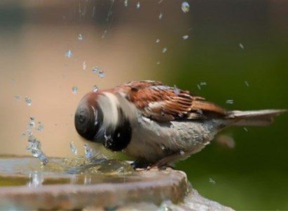 golpe-calor-aves-1|golpe-calor-aves-2|golpe-calor-aves-3