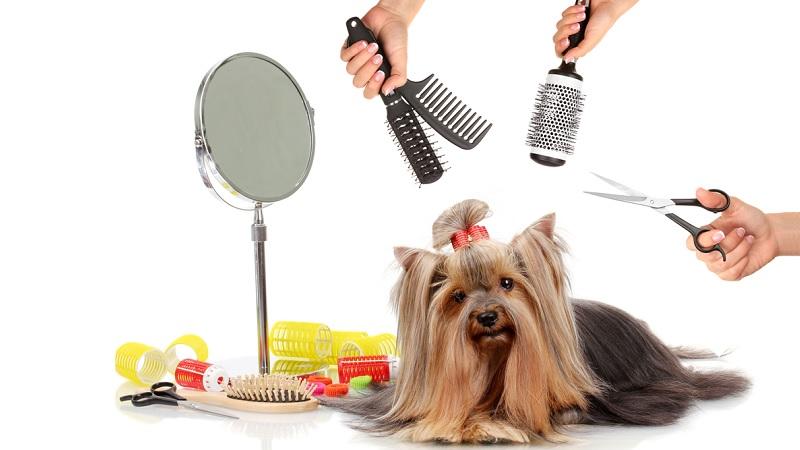 herramientas-en-la-peluqueria-canina|desinfeccion-de-las-herramientas-de-la-peluqueria-canina-por-uv|corte-de-pelo-en-la-peluqueria-canina
