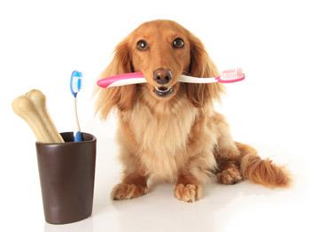 higiene-bucal-del-perro|cepillos-de-dientes-para-perros|limpieza-bucal-del-perro-con-aparato-de-ultrasonidos|cepillado-de-dientes-del-perro