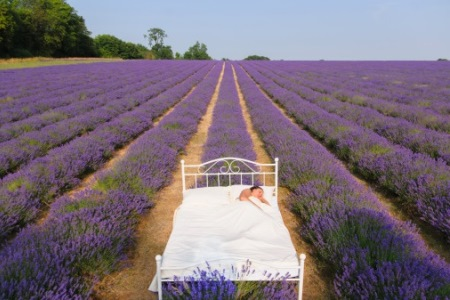 la aromaterapia ayuda a combatir el insomio|aromaterapia y aceites esenciales|aceites esenciales|Ylang-Ylang|manzanilla-romana