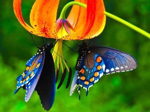 las-mariposas-saborean-por-sus-patas-1 las-mariposas-saborean-por-sus-patas-2 las-mariposas-saborean-por-sus-patas-3 las-mariposas-saborean-por-sus-patas-4 