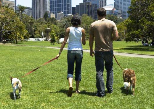 los-perros-ayudan-a-ligar-3|los-perros-ayudan-a-ligar-2|los-perros-ayudan-a-ligar-4|los-perros-ayudan-a-ligar-1