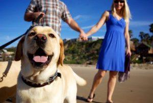 los-perros-ayudan-a-ligar-4
