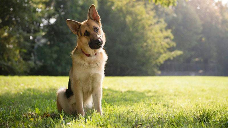 los-perros-pueden-adoptar-la-perspectiva-de-los-humanos|perro-con-viento