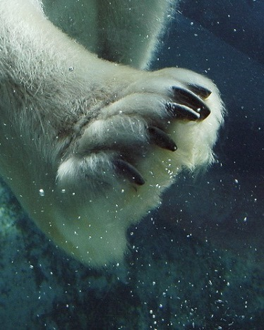 mamiferos-marinos-oso-polar-3