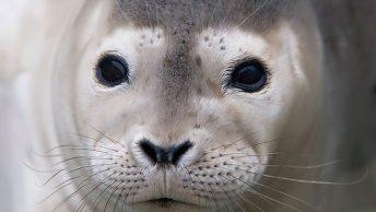 manchas-gripe-mamiferos-marinos|Bebe de león marino