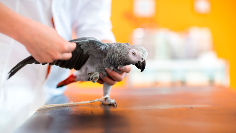 Manejo y sujeción de aves
