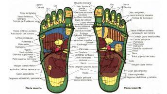 mapa-de-reflexologia-podal-min|aplicacion-de-la-tecnica-de-reflexologia-podal