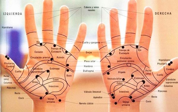 Mapa de las áreas reflejas de la reflexología de manos
