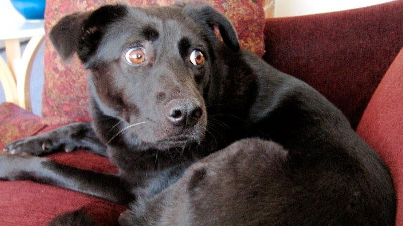 Mascotas estresadas: perro asustado