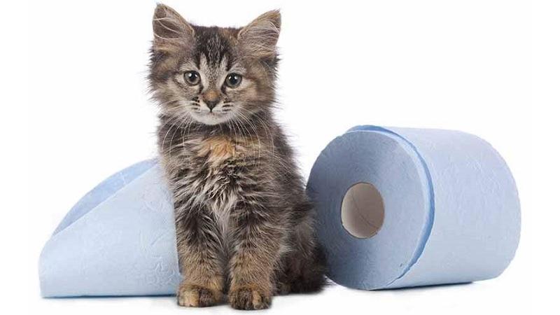 mi-gato-tiene-diarrea|gato-acostado