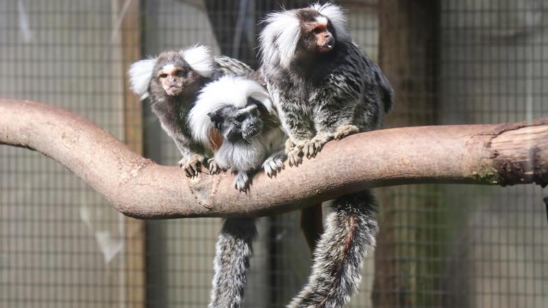 Cómo son las instalaciones zoológicas de los animales 3