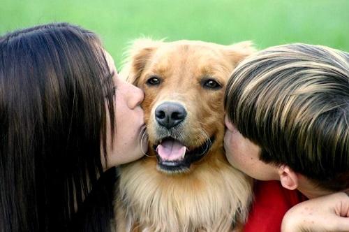 ninos y perros|||||||||||golden-retriever-min|border-collie-min