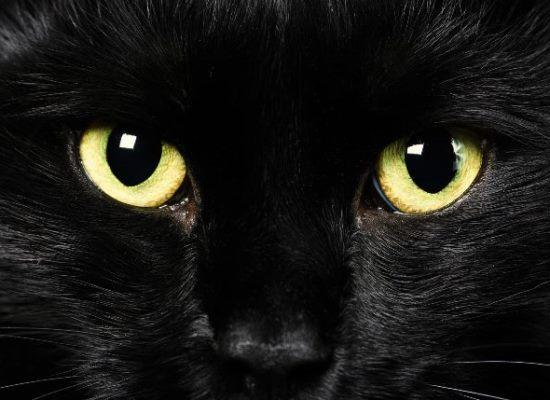 ojos-gatos-brillan-oscuridad|Bigotes-gato-CIMFormacion|lengua-gato