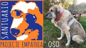 oso-projecte-empathia-min|apadrinamiento-oso-perro-projecte-empathia-de-valls