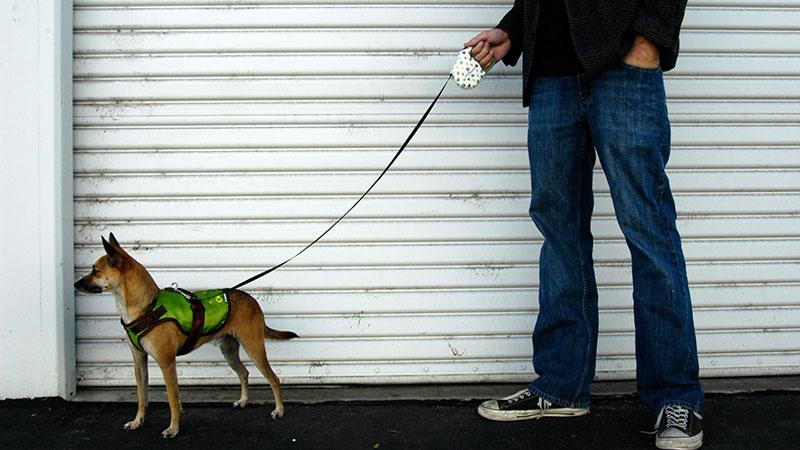 paseando al perro con correa extensible