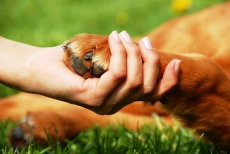 pata de perro y mano de mujer|perro triste