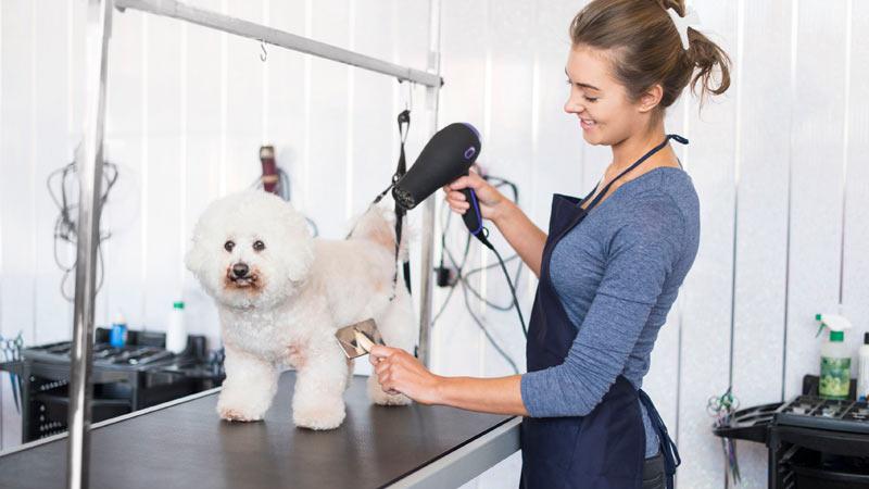 peluquera-seca-perro