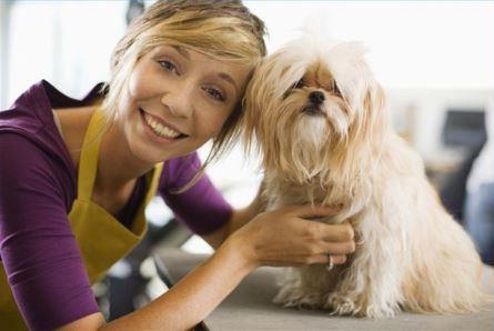 peluqueria canina|perro