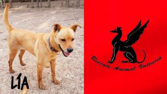 perra-lia-rescate-animal-min