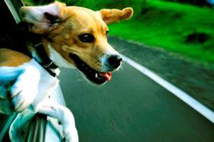 perro-asomado-por-ventanilla-del-coche