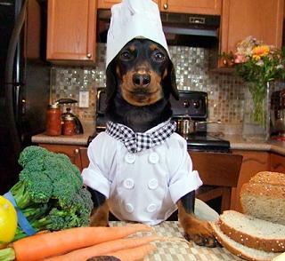 perro-cocinero-CIMFormacion|cocker-comida-casera-CIMFormacion