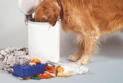 perro-comiendo-basuras-CIMFormacion