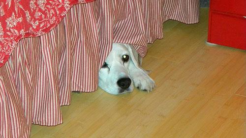 perro-con-miedo|perro-tiene-miedo|tormenta