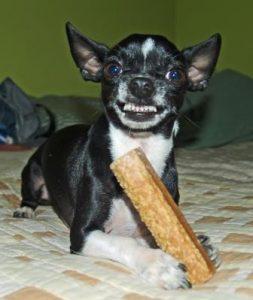 perro defendiendo su hueso