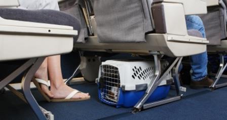 perro-en-avion viajar-con-animales animales-en-la-bodega-del-avion