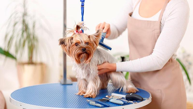 perro-en-la-peluqueria-canina|interior-de-tienda-peluqueria-canina|peluqueria-canina-movil-furgoneta