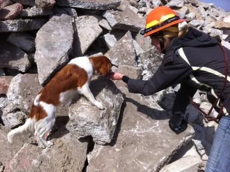 perro-en-rescate|busqueda-y-rescate-caninos|perro-de-rescate