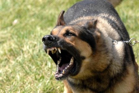 perro ladrando|perro defendiendo su hueso|perro