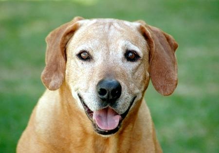 perro-mayor-1