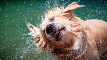perro-mojado-min