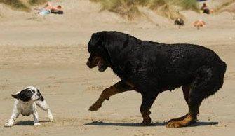 perro-pequeno-perro-grande|perros-pequeños-grandes|perros-pequenos-grandes