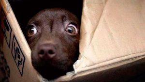 perro tiene miedo
