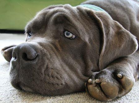 perro triste|perros optimistas y pesimistas|ansiedad por separacion|destrucción por ansiedad por separación|perro optimista o pesimista|destruccion por ansiedad por separacion