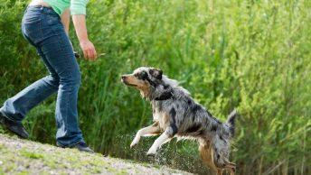 perro-venga-hacia-mi|enseñar-a-mi-perro-que-venga-1|enseñar-a-mi-perro-que-venga-2|ensenar-educar-a-mi-perro-que-venga-1|ensenar-educar-a-mi-perro-que-venga-2