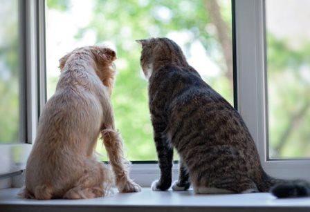 perro-y-gato|articulaciones-perro|chica-y-su-perro|masaje-perro